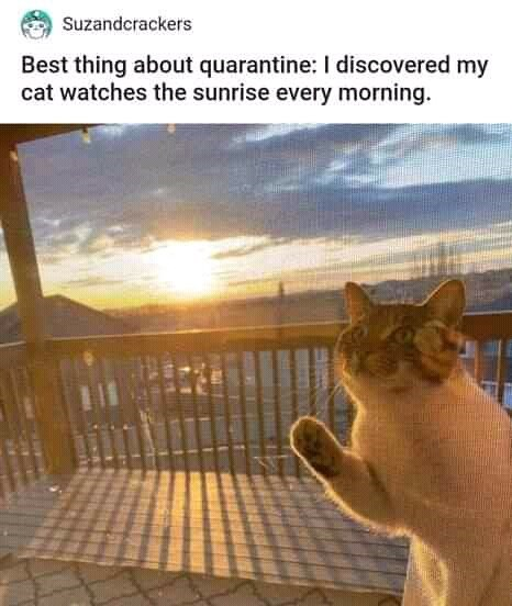 Cat - Suzandcrackers Best thing about quarantine: I discovered my cat watches the sunrise every morning.