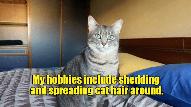 Cat - My hobbies include shedding and spreading cat hair around.