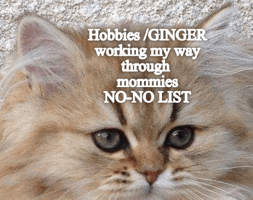 Cat - Hobbies /GINGER working my way through mommies NO-NO LIST