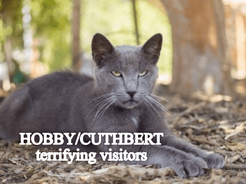 Cat - HOBBY/CUTHBERT terrifying visitors