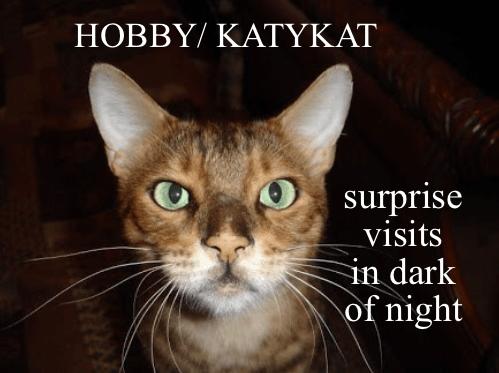 Cat - HOBBYΙ ΚΑΤΥΚΑΤ surprise visits in dark of night