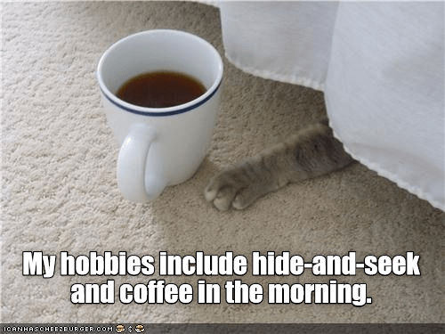 Morning - My hobbies include hide-and-seek and coffee in the morning. ICANHASCHEEZEURGER.COM