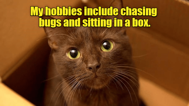 Cat - My hobbies include chasing bugs and sitting in a box.