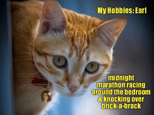 Cat - My Hobbies: Earl midnight marathon racing around the bedroom & knocking over brick-a-brack
