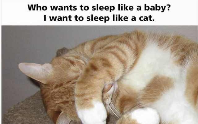 Cat - Who wants to sleep like a baby? I want to sleep like a cat.