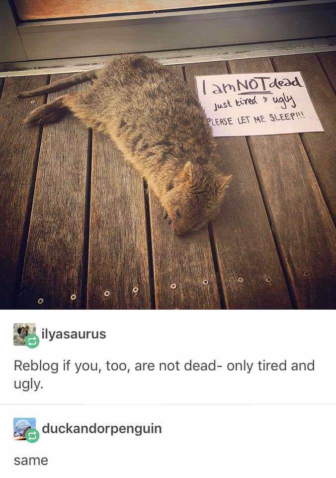 Text - lamNOTdead Just tired ugly PLEASE LET ME SLEEP!! ilyasaurus Reblog if you, too, are not dead- only tired and ugly. duckandorpenguin same