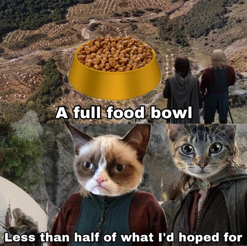 Cat - A full food bowl Less than half of what l'd hoped for