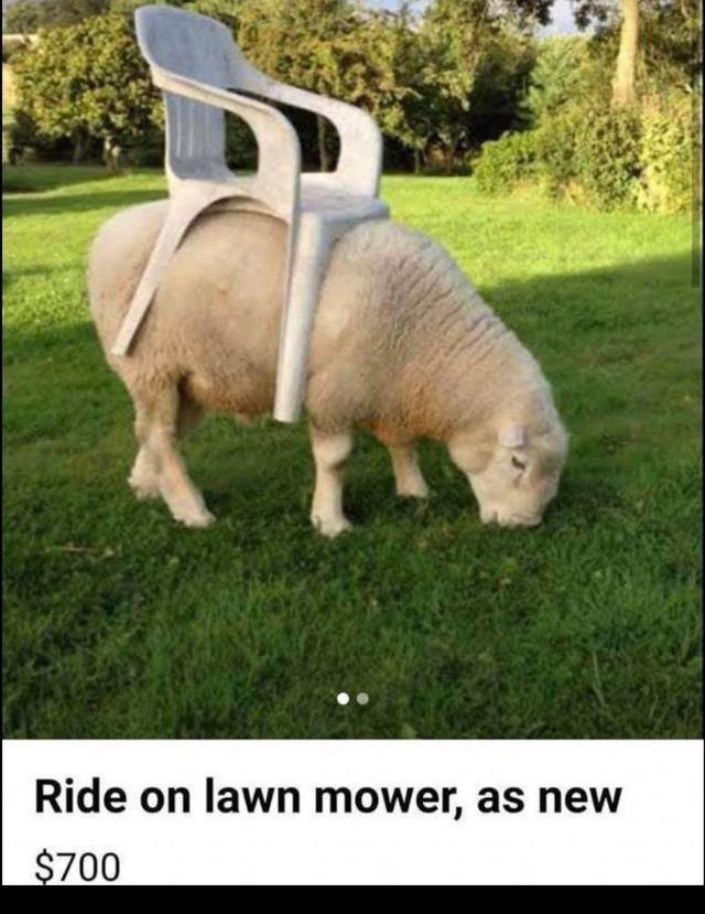 Grass - Ride on lawn mower, as new $700