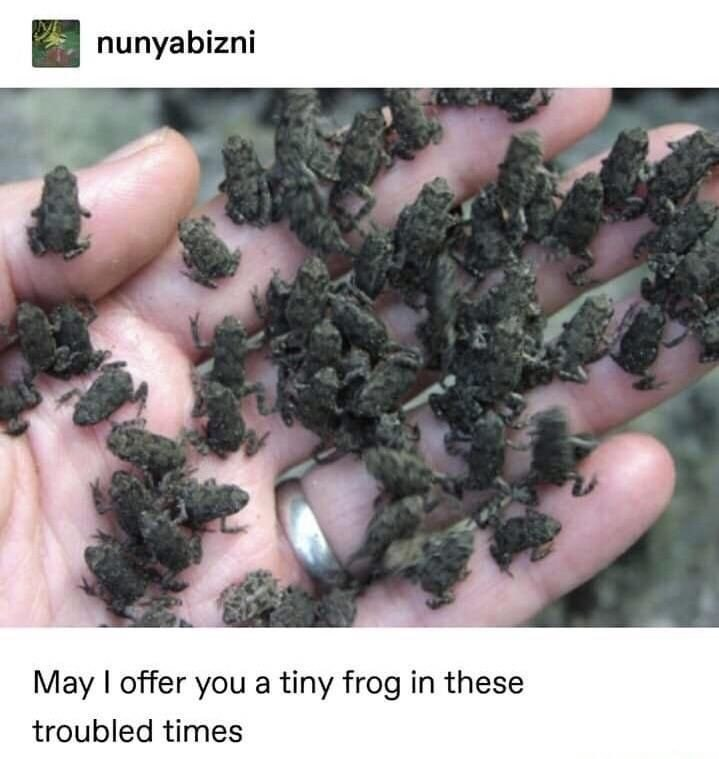 May I offer you a tiny frog in these troubled times human palm with multiple tiny frogs covering it