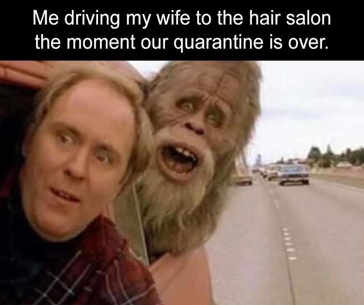 Me driving my wife to the hair salon the moment our quarantine is over. man driving in a car with a hairy ape