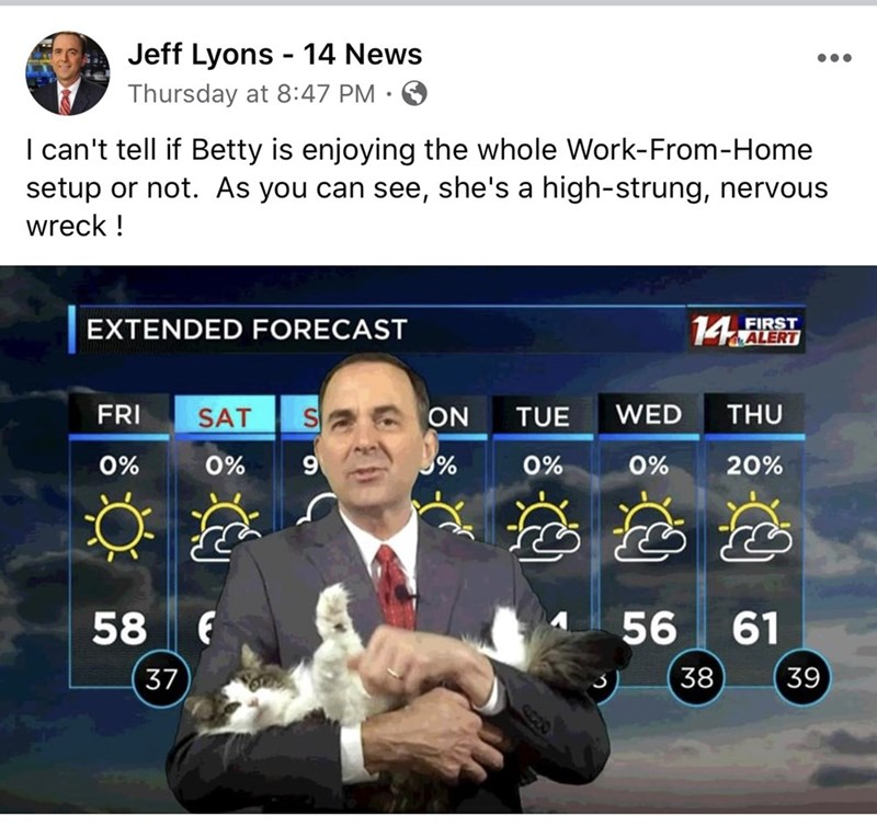 Technology - Jeff Lyons - 14 News Thursday at 8:47 PM I can't tell if Betty is enjoying the whole Work-From-Home setup or not. As you can see, she's a high-strung, nervous wreck ! 14 ALERT FIRST EXTENDED FORECAST FRI SAT ON TUE WED THU 0% 0% % 0% 0% 20% 58 56 61 37 38 39 82)