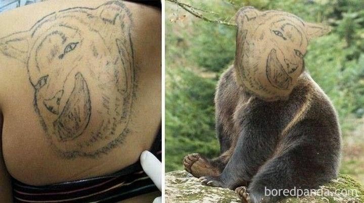 Brown bear - boredpanda com