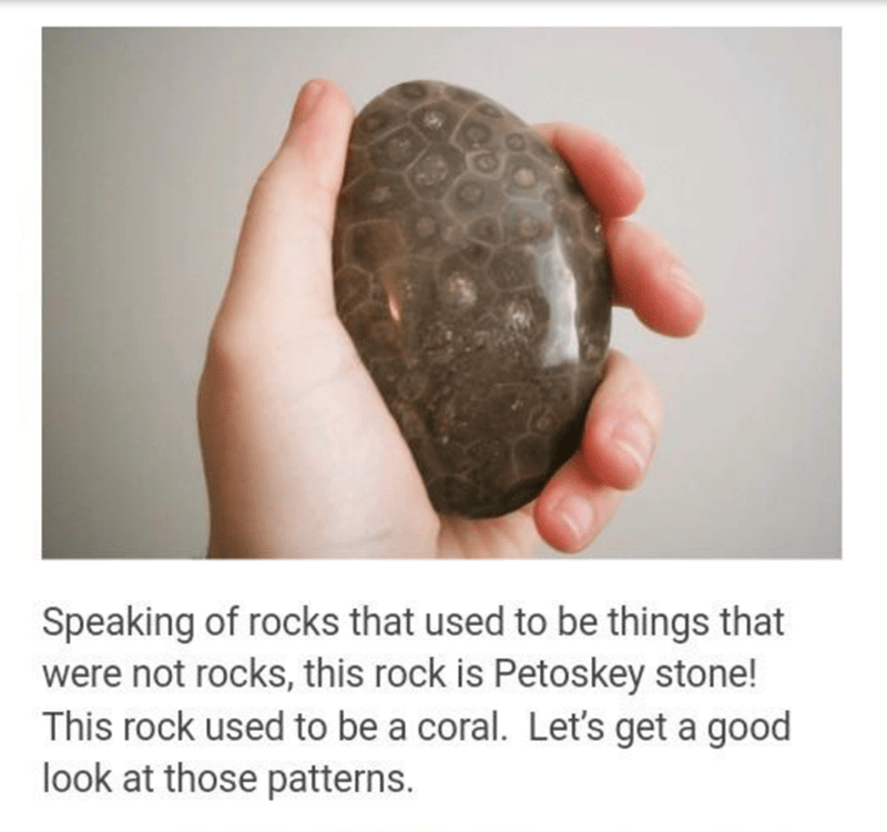 Turtle - Speaking of rocks that used to be things that were not rocks, this rock is Petoskey stone! This rock used to be a coral. Let's get a good look at those patterns.