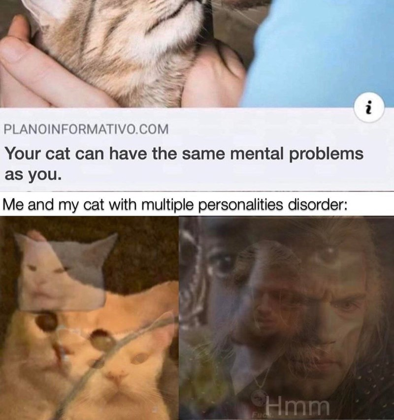 Cat - PLANOINFORMATIVO.COM Your cat can have the same mental problems as you. Me and my cat with multiple personalities disorder: Hmm Fuck