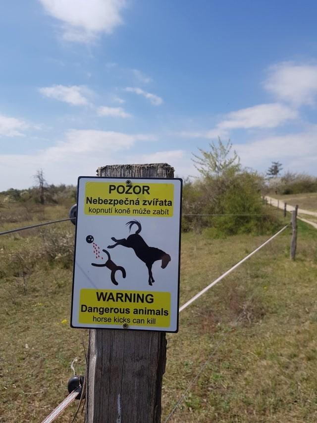 Nature reserve - POŽOR Nebezpečná zvířata kopnutí koně může zabít WARNING Dangerous animals horse kicks can kill