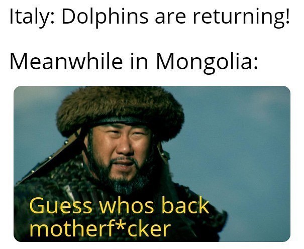 Text - Italy: Dolphins are returning! Meanwhile in Mongolia: Guess whos back motherf*cker