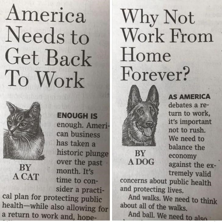Text - Text - America Needs to Get Back To Work Why Not Work From Home Forever? AS AMERICA debates a re- turn to work, it's important not to rush. We need to balance the ENOUGH IS enough. Ameri- can business has taken a historic plunge over the past month. It's BY A DOG BY A CAT economy against the ex- tremely valid concerns about public health time to con- sider a practi- cal plan for protecting public health-while also allowing for a return to work and, hope- and protecting lives. And walks. W