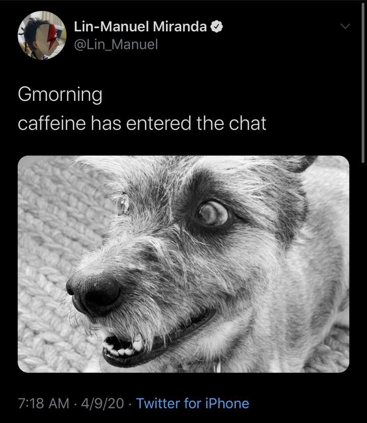 Dog breed - Lin-Manuel Miranda @Lin_Manuel Gmorning caffeine has entered the chat 7:18 AM · 4/9/20 · Twitter for iPhone