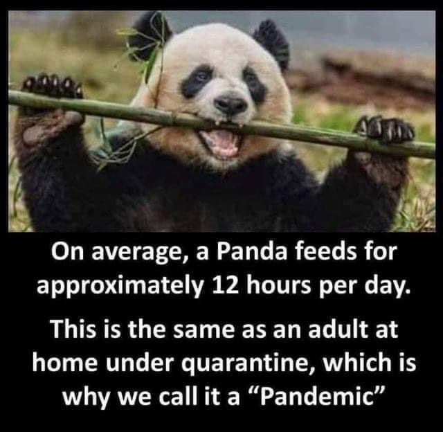 "Vertebrate - On average, a Panda feeds for approximately 12 hours per day. This is the same as an adult at home under quarantine, which is why we call it a ""Pandemic"""