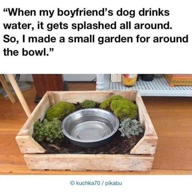 "Product - ""When my boyfriend's dog drinks water, it gets splashed all around. So, I made a small garden for around the bowl."" © kuchka70 / pikabu"