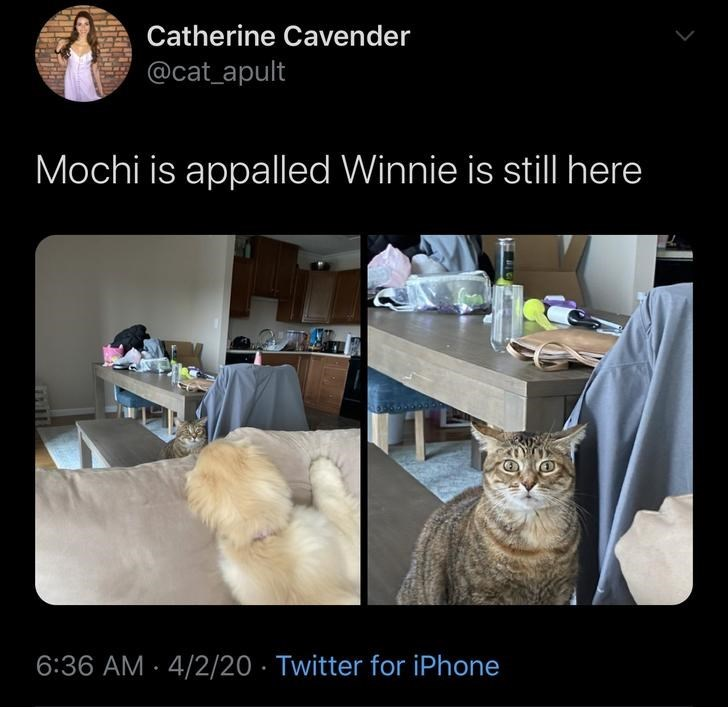 Cat - Catherine Cavender @cat_apult Mochi is appalled Winnie is still here 6:36 AM - 4/2/20 · Twitter for iPhone