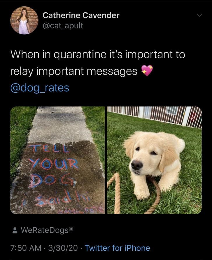Dog - Catherine Cavender @cat_apult When in quarantine it's important to relay important messages @dog_rates TELE YOUR 2 WeRateDogs® 7:50 AM · 3/30/20 · Twitter for iPhone