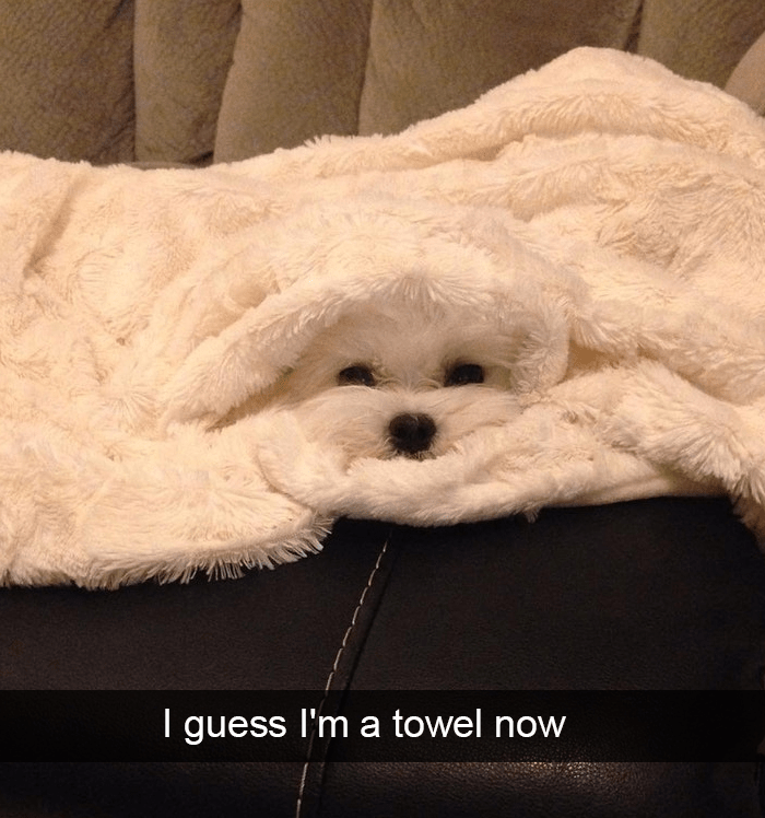 Dog - I guess I'm a towel now