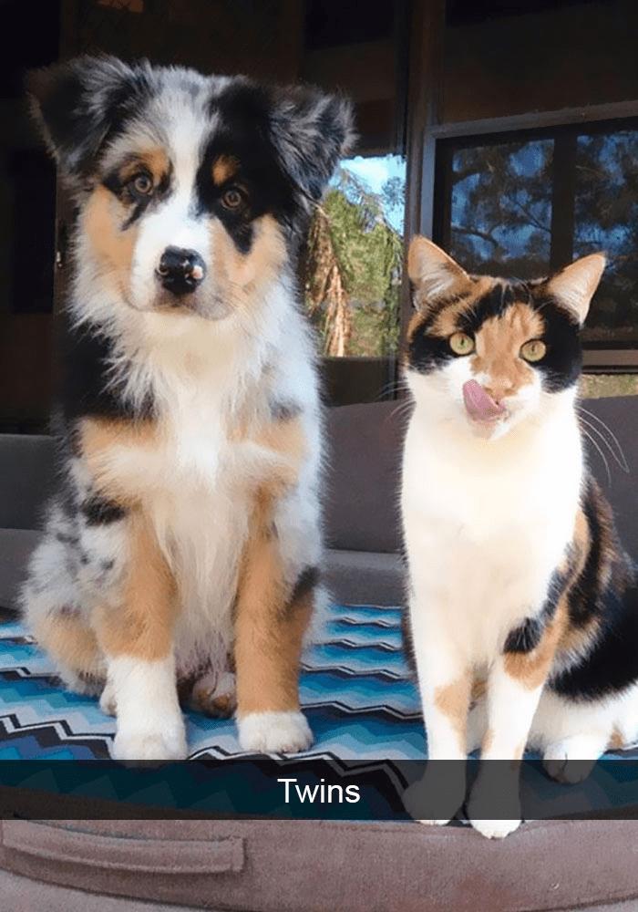 Mammal - Twins