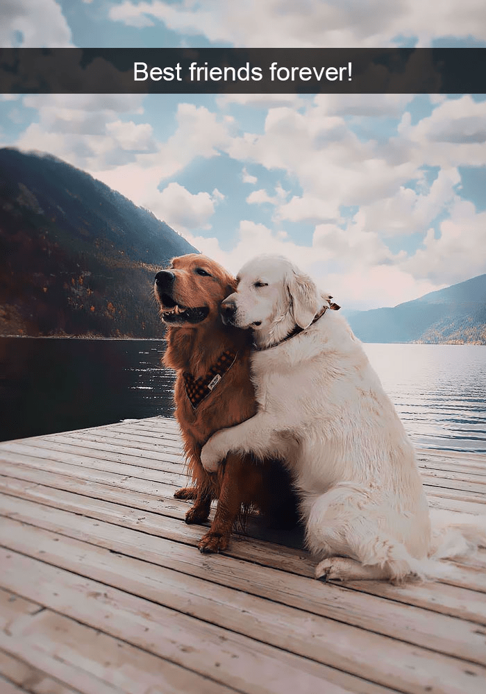 Dog - Best friends forever!