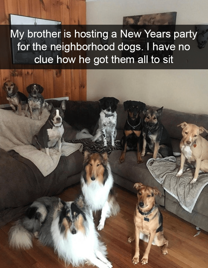 Dog - My brother is hosting a New Years party for the neighborhood dogs. I have no clue how he got them all to sit