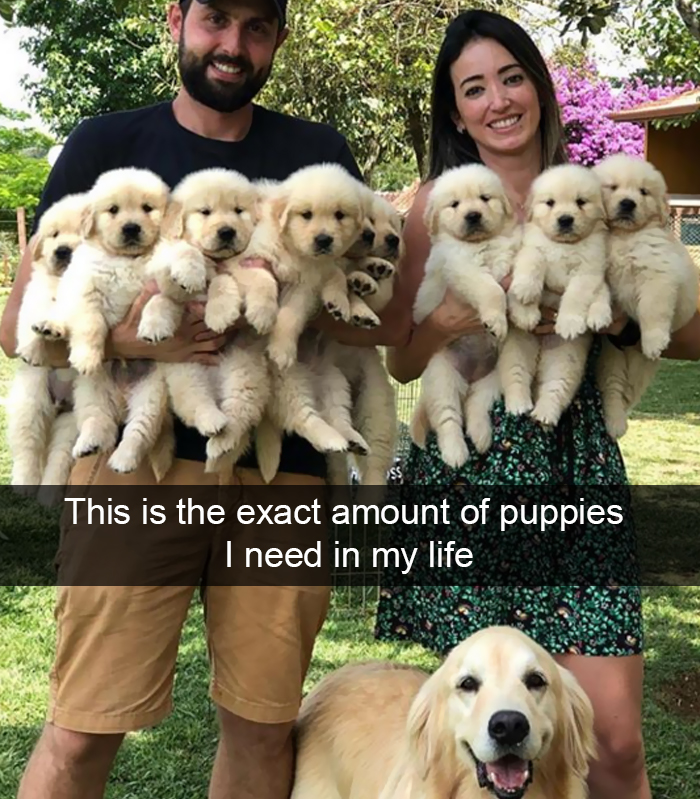 Dog - This is the exact amount of puppies I need in my life