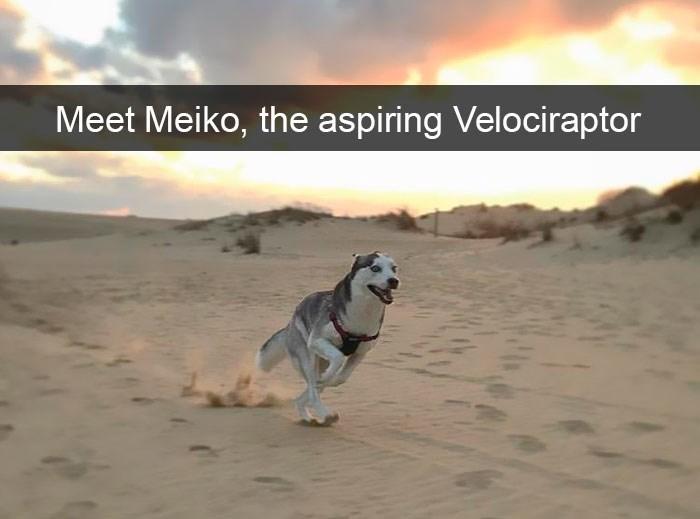 Mammal - Meet Meiko, the aspiring Velociraptor