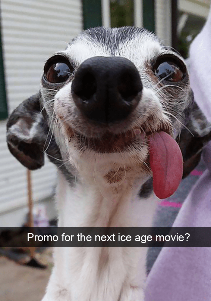 Dog - Promo for the next ice age movie?