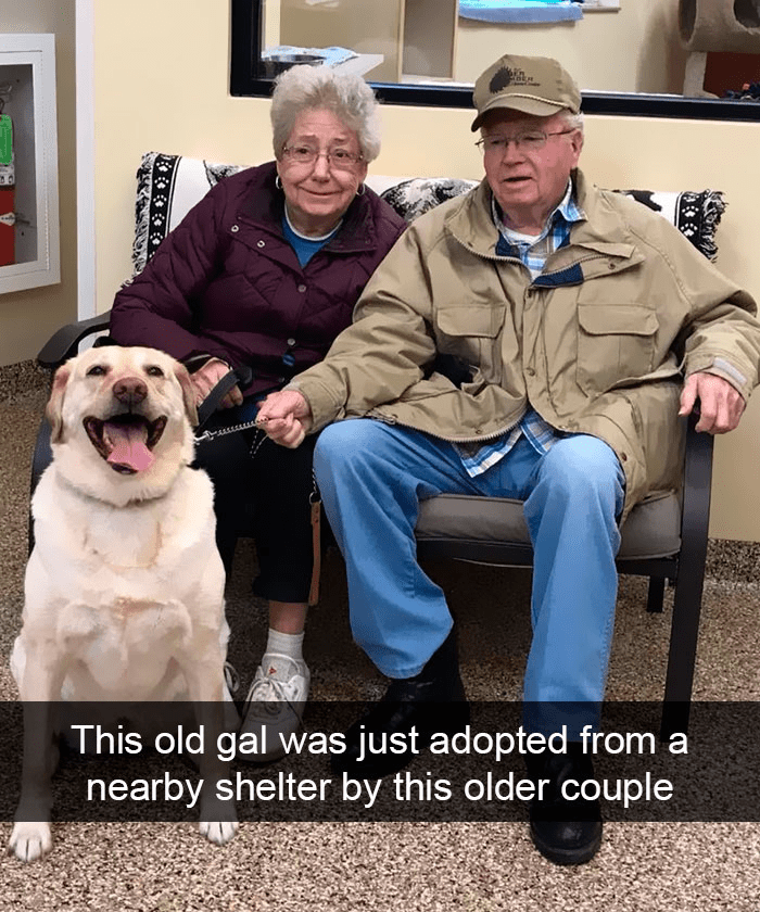 Vertebrate - This old gal was just adopted from a nearby shelter by this older couple