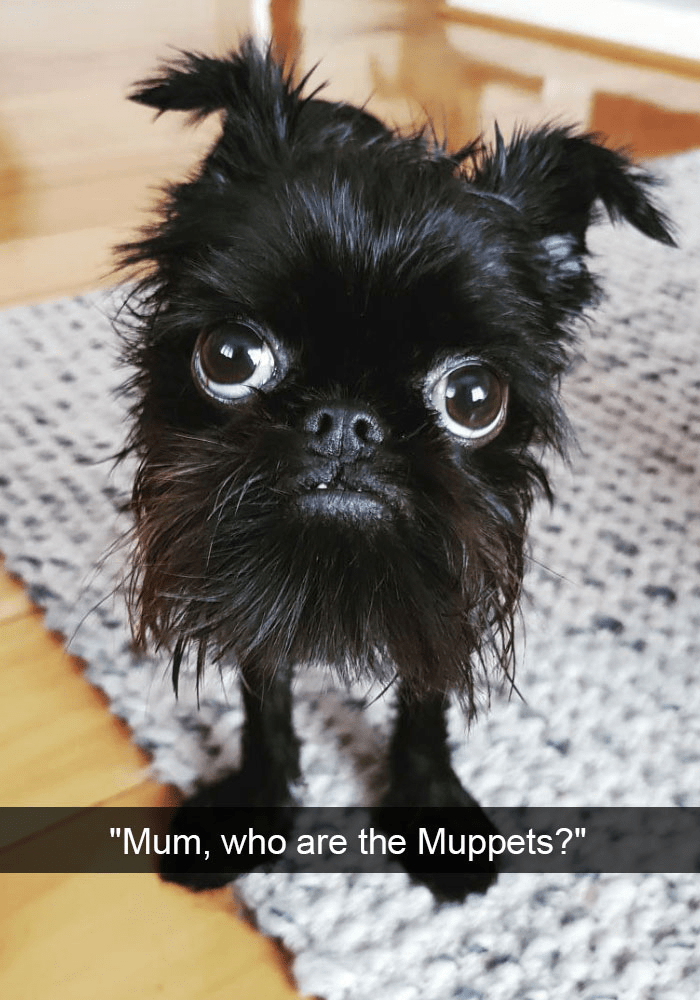 """Dog - """"Mum, who are the Muppets?"""""""