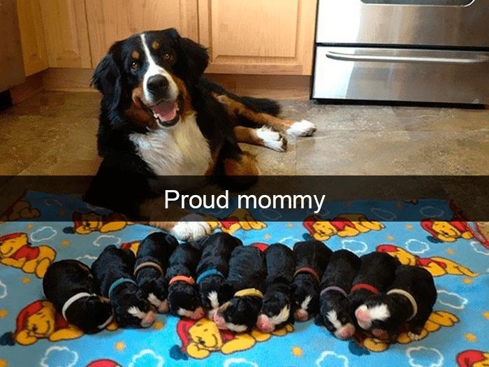 Dog - Proud mommy