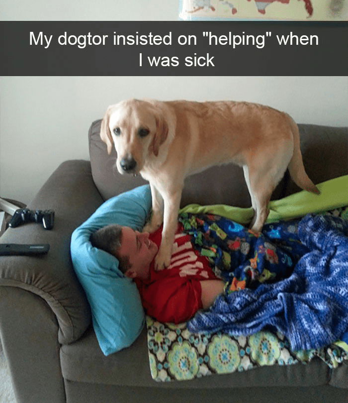 """Dog - My dogtor insisted on """"helping"""" when I was sick"""