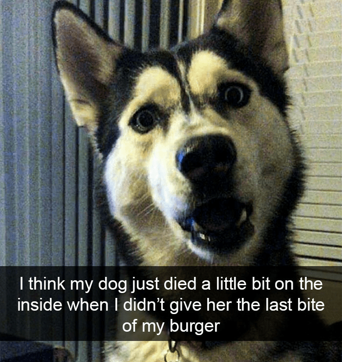 Mammal - I think my dog just died a little bit on the inside when I didn't give her the last bite of my burger
