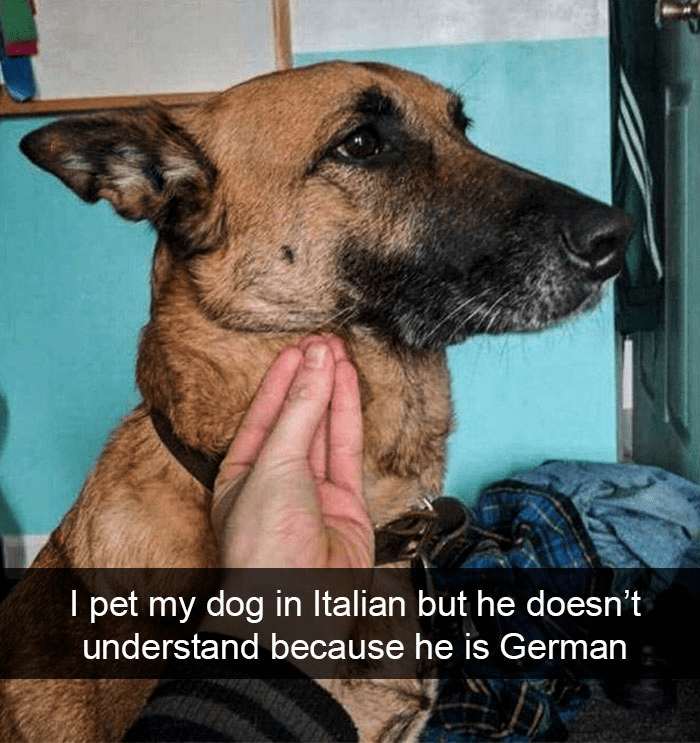 Dog - I pet my dog in Italian but he doesn't understand because he is German