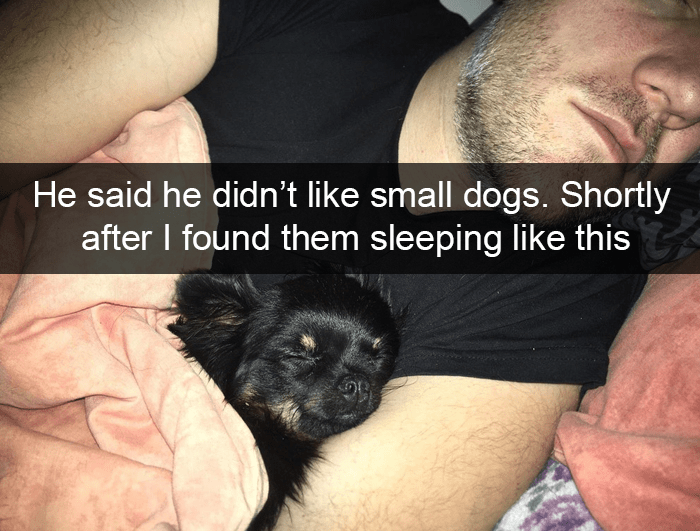 Companion dog - He said he didn't like small dogs. Shortly after I found them sleeping like this