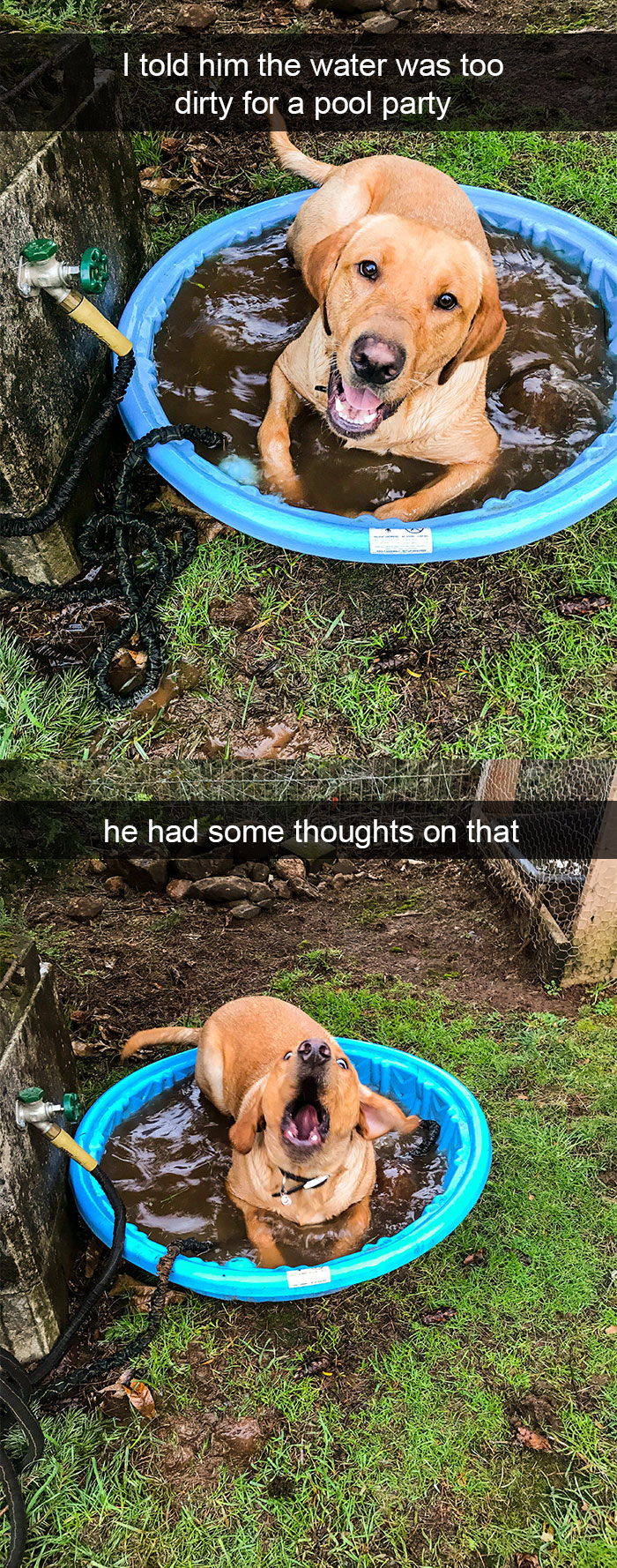 Dog - I told him the water was too dirty for a pool party he had some thoughts on that