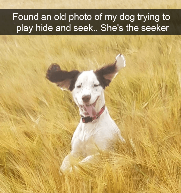 Dog - Found an old photo of my dog trying to play hide and seek.. She's the seeker