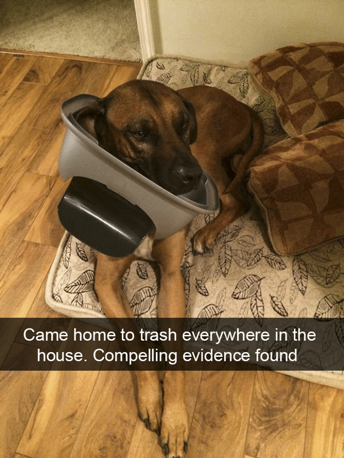 Dog breed - Came home to trash everywhere in the house. Compelling evidence found