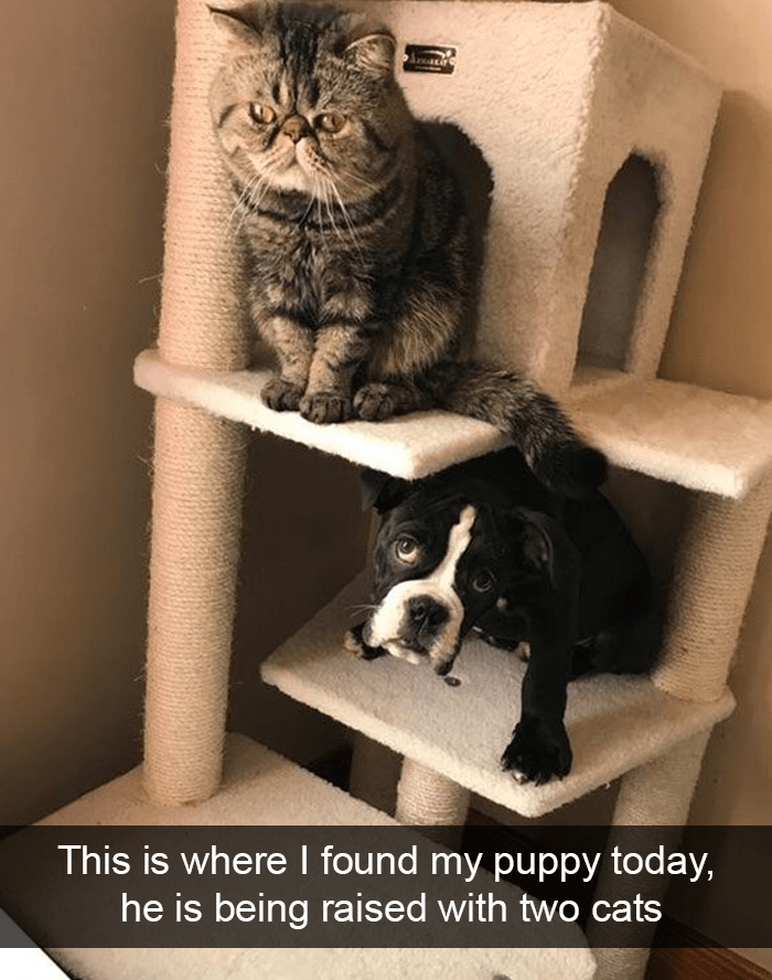 Cat - This is where I found my puppy today, he is being raised with two cats