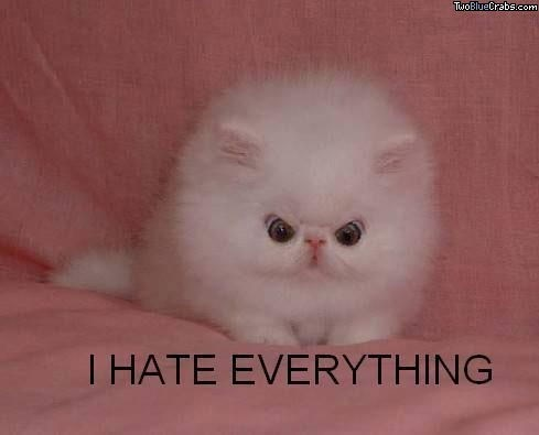 Cat - TwoBlueCrabs.com T HATE EVERYTHING