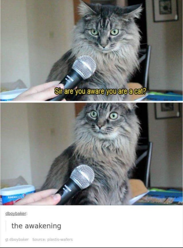 Cat - Sir are you aware you are a cat? AHERICA dboybaker: the awakening dboybaker Source: plastis-wafers
