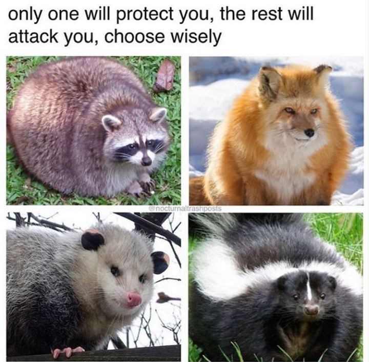 Wildlife - only one will protect you, the rest will attack you, choose wisely nocturnaltrasnposts