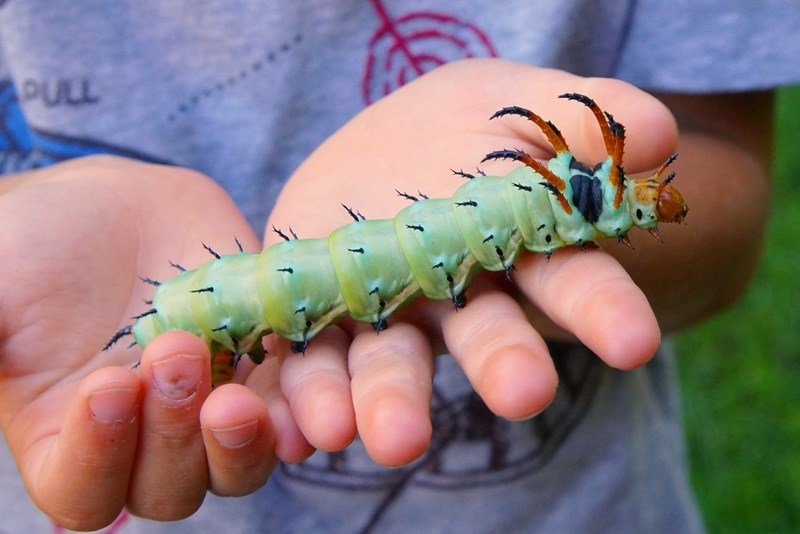 Caterpillar - PULL