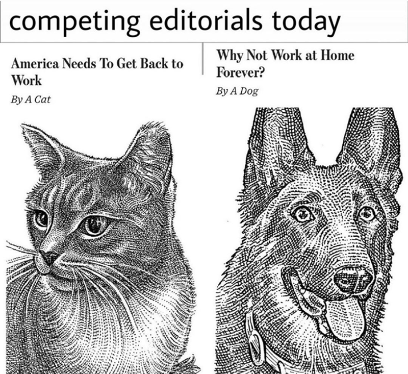 Funny meme about cat and dog editorials | competing editorials today Why Not Work at Home Forever? Work By A Dog America Needs To Get Back to By A Cat