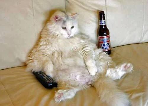Cat - BUD IGH